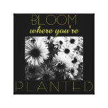 Bloom Where You're Planted Canvas Stretched Canvas Prints