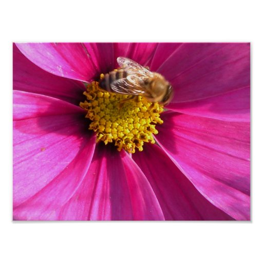 Bloom with a Honey Bee Poster