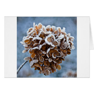 Bloom with ice crystals card