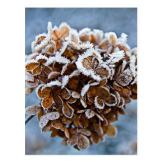 Bloom with ice crystals postcard