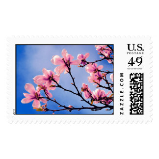 Bloomed Cherry Tree Stamps