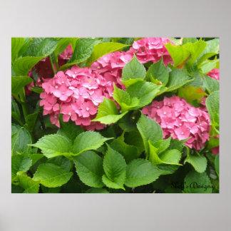 Bloomin' Hydrangeas Poster