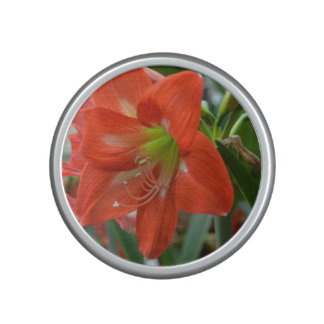 Blooming Amaryllis Speaker