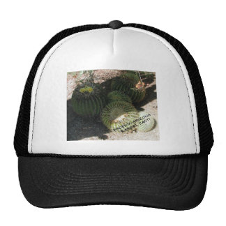 BLOOMING BARREL CACTI AND ASSORTED PHRASES MESH HATS