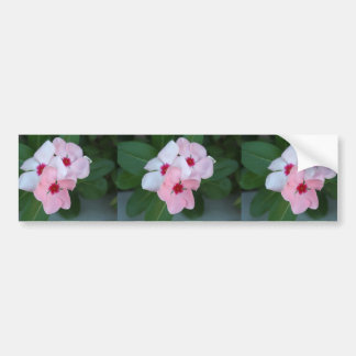 Blooming Beautiful Pink Impatiens Flowers Bumper Sticker