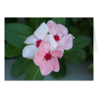Blooming Beautiful Pink Impatiens Flowers Card