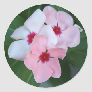 Blooming Beautiful Pink Impatiens Flowers Classic Round Sticker