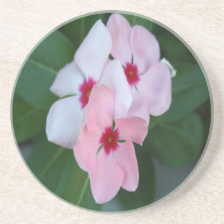 Blooming Beautiful Pink Impatiens Flowers Coaster