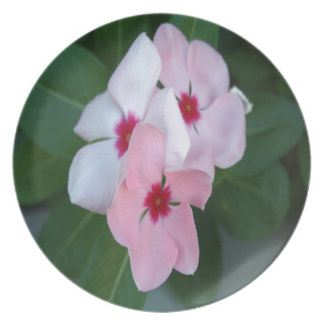 Blooming Beautiful Pink Impatiens Flowers Dinner Plate