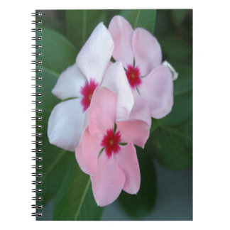 Blooming Beautiful Pink Impatiens Flowers Notebook
