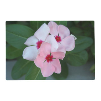 Blooming Beautiful Pink Impatiens Flowers Placemat