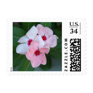 Blooming Beautiful Pink Impatiens Flowers Postage