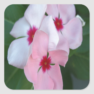 Blooming Beautiful Pink Impatiens Flowers Square Sticker