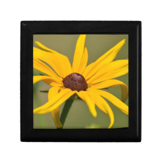 Blooming Black Eyed Susan Gift Box