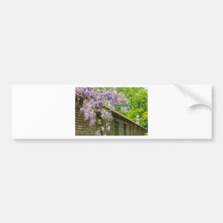 Blooming blue wisteria hanging over long brick wal bumper sticker