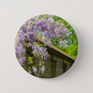 Blooming blue wisteria hanging over long brick wal button