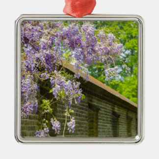Blooming blue wisteria hanging over long brick wal metal ornament