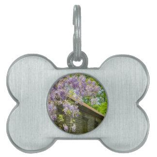 Blooming blue wisteria hanging over long brick wal pet tag