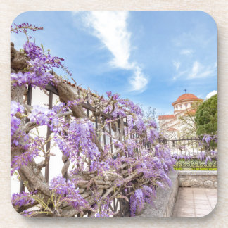 Blooming blue Wisteria sinensis on fence in Greece Beverage Coaster