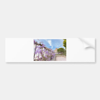 Blooming blue Wisteria sinensis on fence in Greece Bumper Sticker