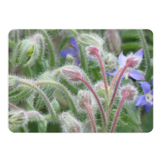 Blooming Borage 5x7 Paper Invitation Card