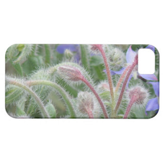 Blooming Borage iPhone 5 Covers