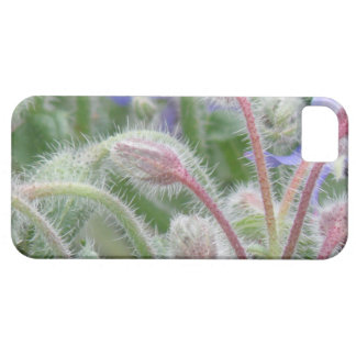 Blooming Borage iPhone 5 Cases