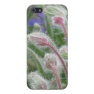 Blooming Borage Cases For iPhone 5
