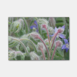 Blooming Borage Post-it® Notes