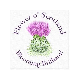 Blooming Brilliant Scottish Thistle Canvas Print