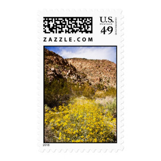 Blooming Brittlebush Stamps