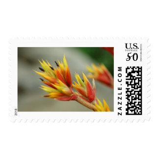 Blooming Bromeliad Postage