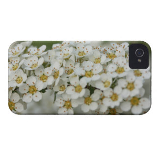 blooming bush with dew Case-Mate iPhone 4 cases