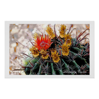 Blooming Cactus, art poster