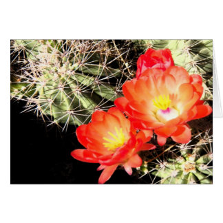 Blooming Cactus at Night Card