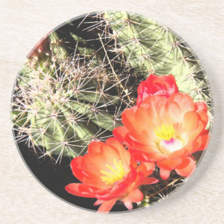 Blooming Cactus at Night Drink Coaster