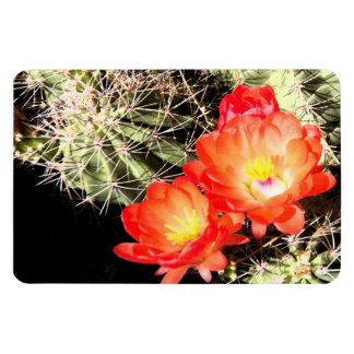 Blooming Cactus at Night Magnet