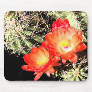 Blooming Cactus at Night Mousepads