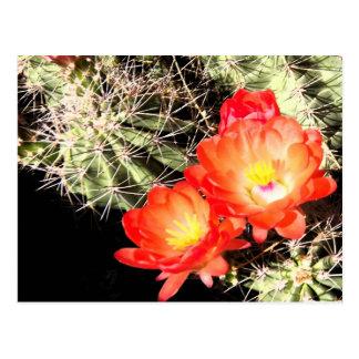 Blooming Cactus at Night Postcard