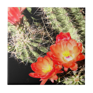 Blooming Cactus at Night Tile