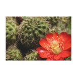 Blooming cactus gallery wrapped canvas