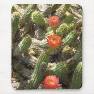 Blooming Cactus Trio Mouse Pad