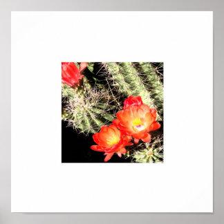 Blooming Cactus White Border Poster