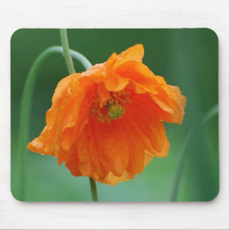 Blooming California Poppy Mouse Pad