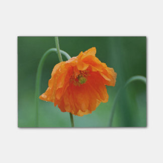 Blooming California Poppy Post-it® Notes