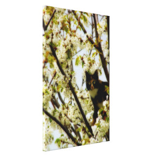 Blooming Cat Canvas Print