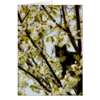 Blooming Cat Card