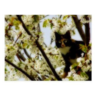 Blooming Cat Postcard