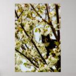Blooming Cat Print
