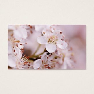 Blooming Cherry Blossoms Business Card